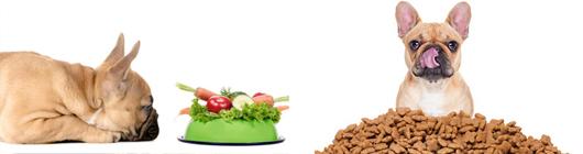 Dog & Cat Nutrition + Homemade Recipes Course