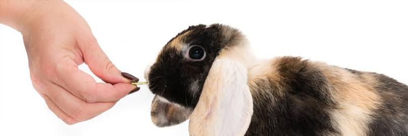 Rabbit Care and Training Course